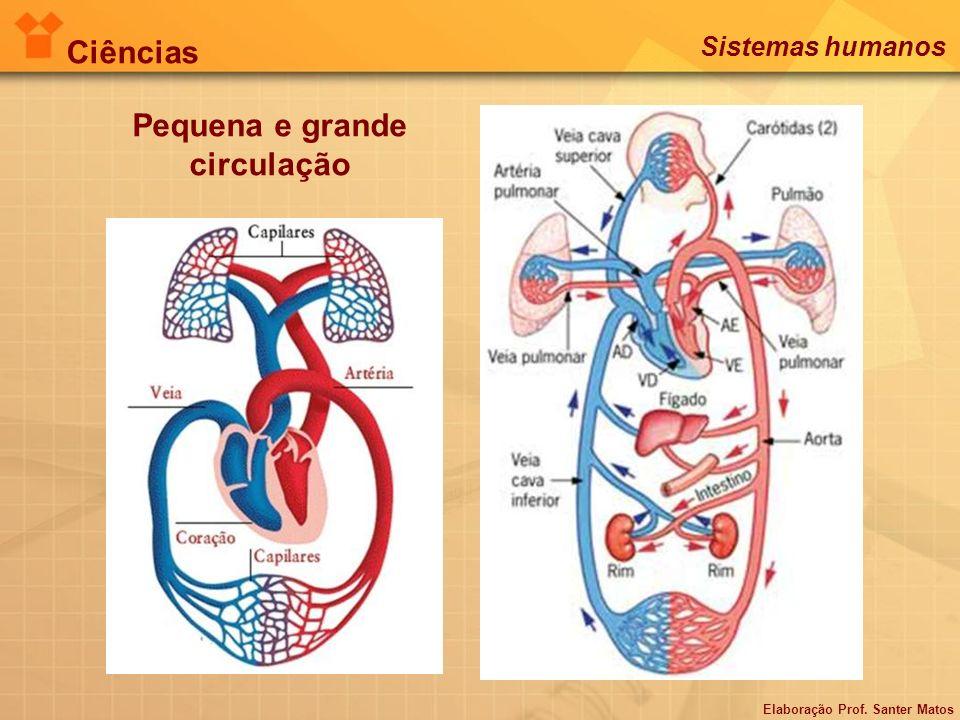Controle dos batimentos cardíacos Ciências Sistemas humanos Elaboração Prof. Santer Matos
