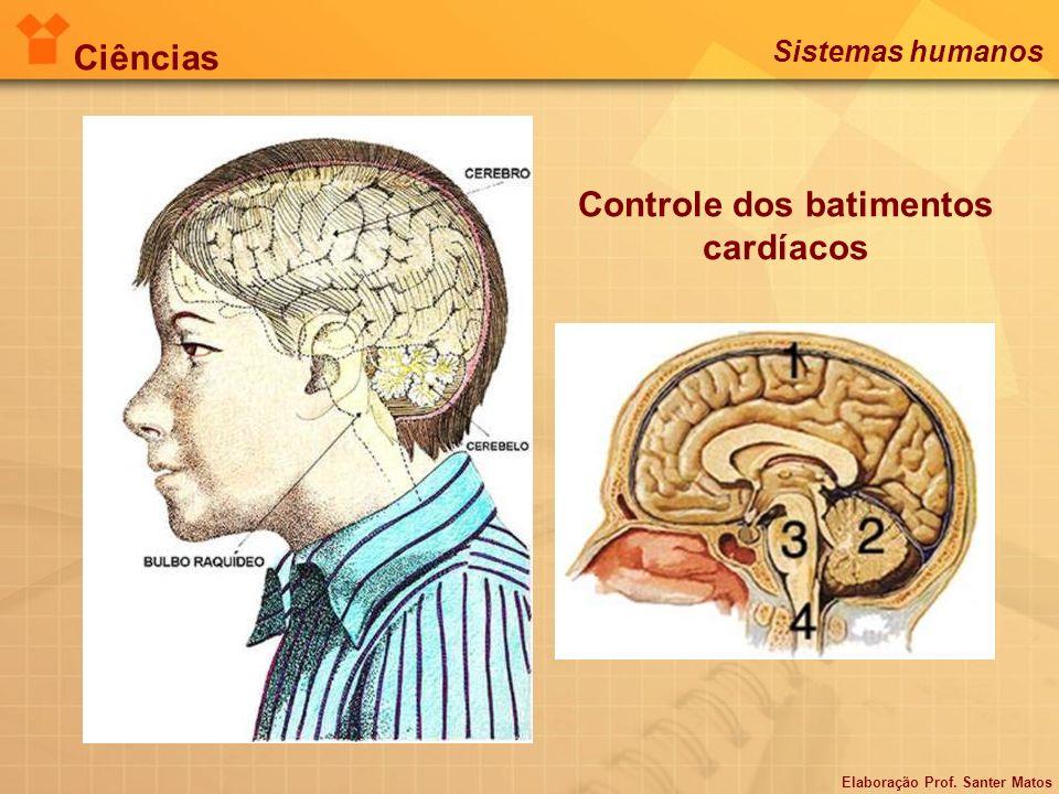 Intestino delgado (duodeno): recebe a bile e o suco pancreático.