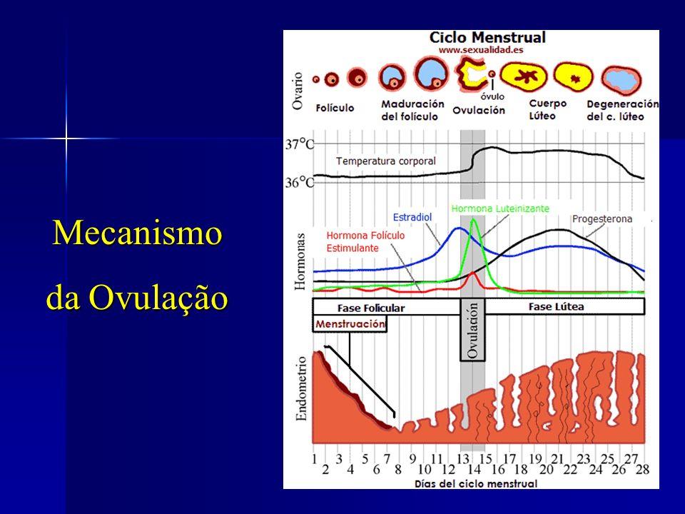 Mecanismo da Ovulação