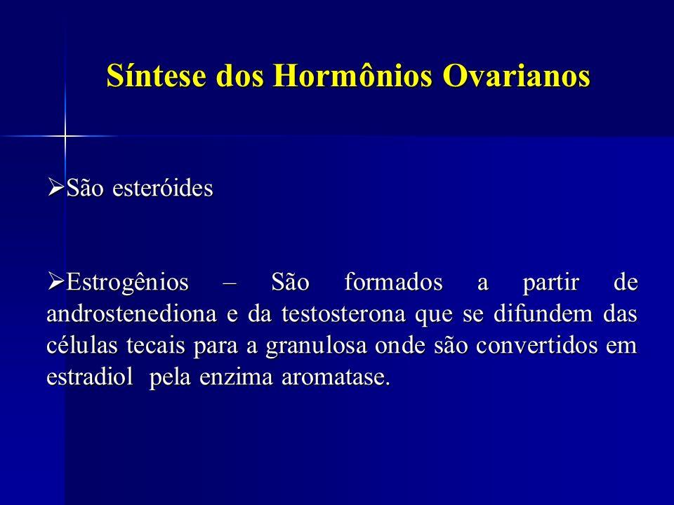 Síntese dos Hormônios Ovarianos São esteróides São esteróides Estrogênios – São formados a partir de androstenediona e da testosterona que se difundem