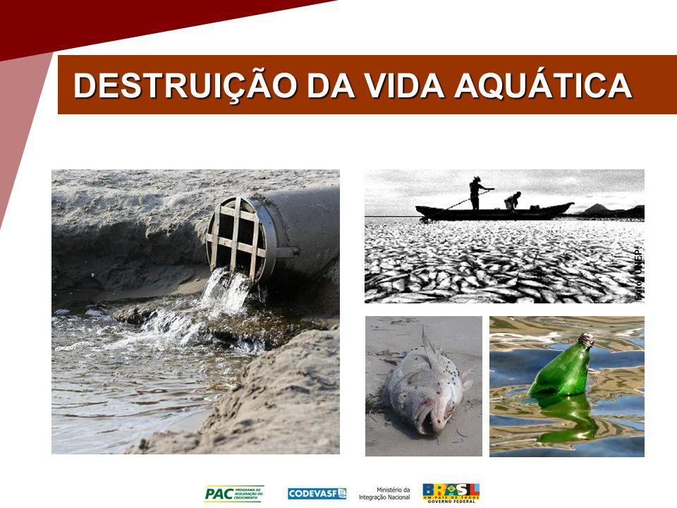 DESTRUIÇÃO DA VIDA AQUÁTICA Foto: UNEP.