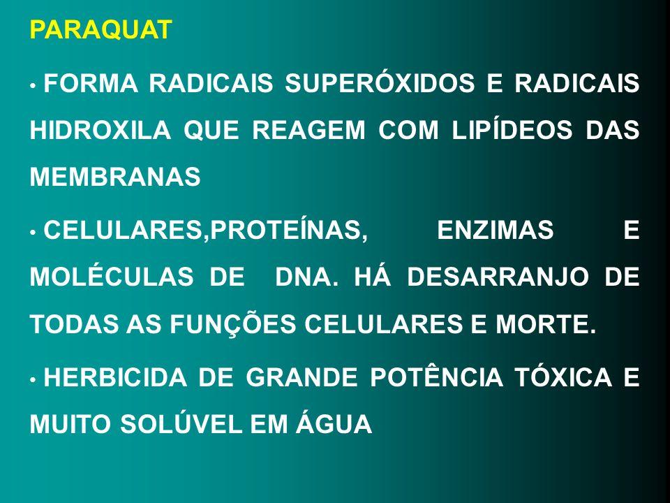 PARAQUAT FORMA RADICAIS SUPERÓXIDOS E RADICAIS HIDROXILA QUE REAGEM COM LIPÍDEOS DAS MEMBRANAS CELULARES,PROTEÍNAS, ENZIMAS E MOLÉCULAS DE DNA. HÁ DES
