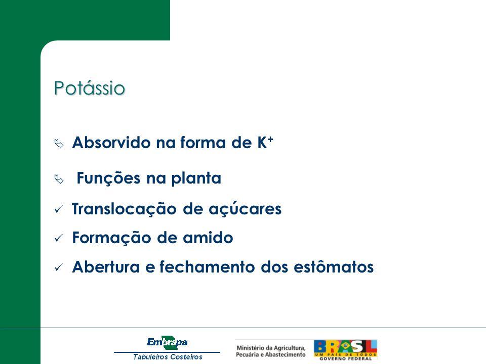Potássio Absorvido na forma de K + Funções na planta Translocação de açúcares Formação de amido Abertura e fechamento dos estômatos
