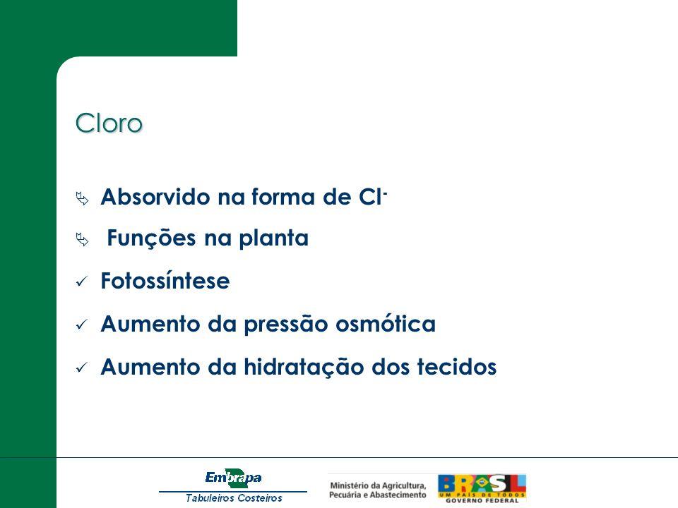 Cloro Absorvido na forma de Cl - Funções na planta Fotossíntese Aumento da pressão osmótica Aumento da hidratação dos tecidos