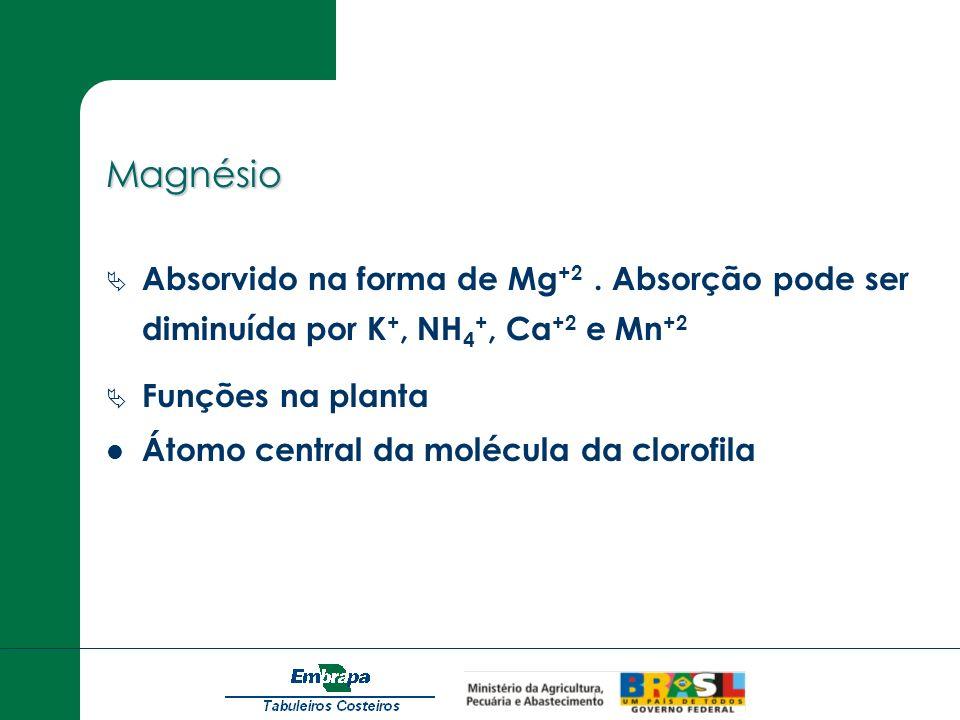 Magnésio Absorvido na forma de Mg +2. Absorção pode ser diminuída por K +, NH 4 +, Ca +2 e Mn +2 Funções na planta Átomo central da molécula da clorof