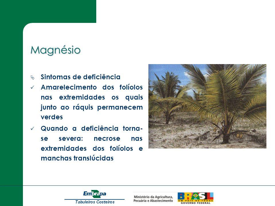 Magnésio Sintomas de deficiência Amarelecimento dos folíolos nas extremidades os quais junto ao ráquis permanecem verdes Quando a deficiência torna- s