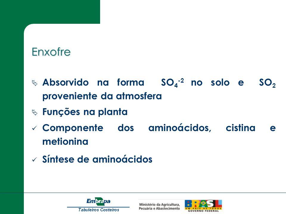 Enxofre Absorvido na forma SO 4 -2 no solo e SO 2 proveniente da atmosfera Funções na planta Componente dos aminoácidos, cistina e metionina Síntese d