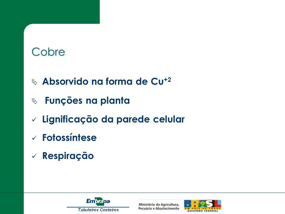 Cobre Absorvido na forma de Cu +2 Funções na planta Lignificação da parede celular Fotossíntese Respiração