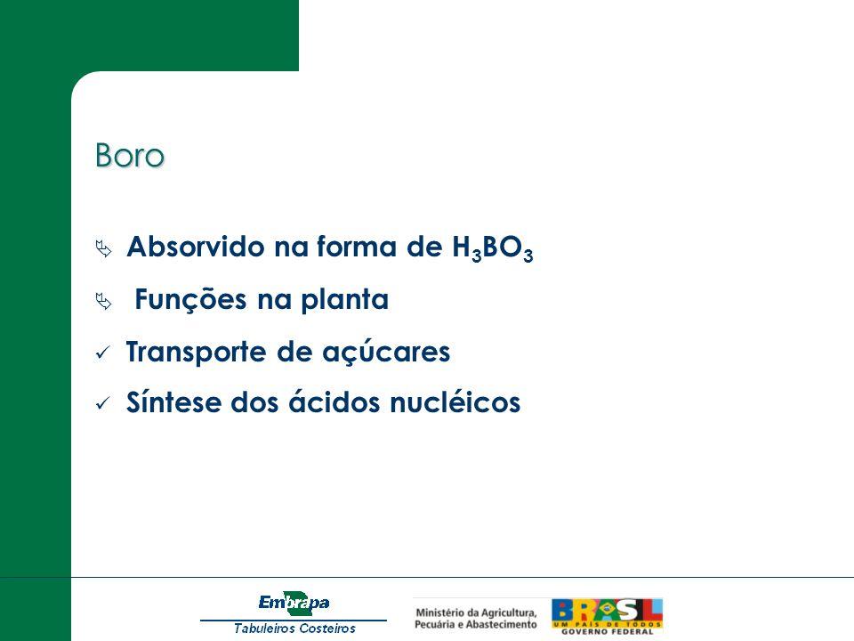 Boro Absorvido na forma de H 3 BO 3 Funções na planta Transporte de açúcares Síntese dos ácidos nucléicos