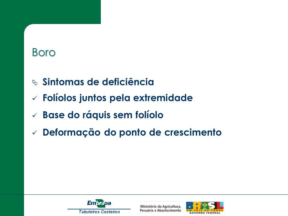 Boro Sintomas de deficiência Folíolos juntos pela extremidade Base do ráquis sem folíolo Deformação do ponto de crescimento