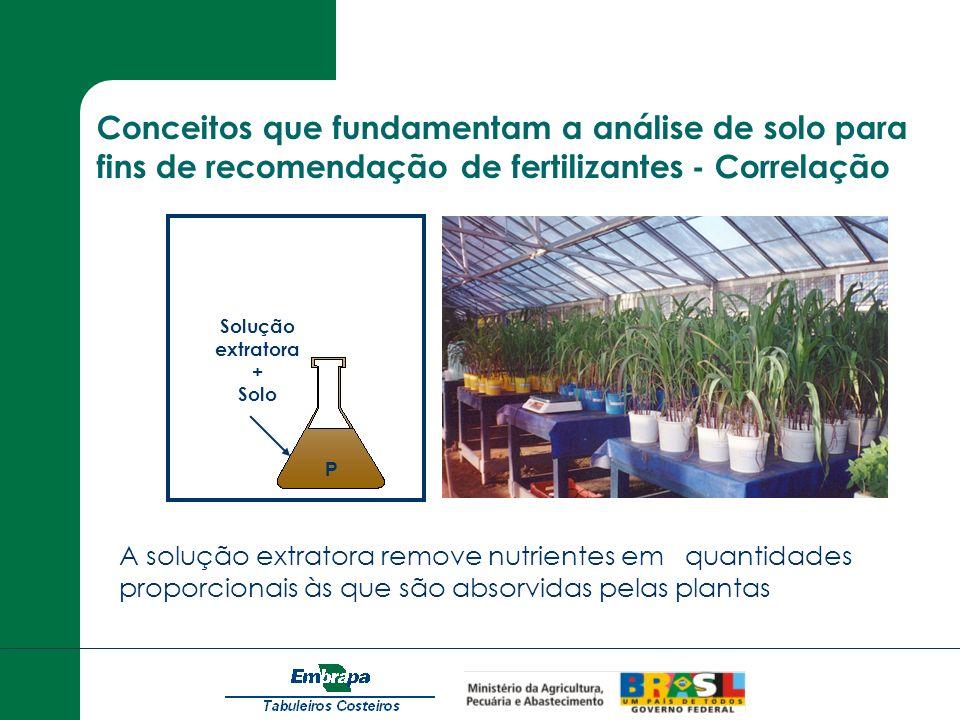 Solução extratora + Solo P A solução extratora remove nutrientes em quantidades proporcionais às que são absorvidas pelas plantas Conceitos que fundam