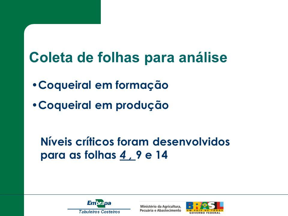 Coleta de folhas para análise Coqueiral em formação Coqueiral em produção Níveis críticos foram desenvolvidos para as folhas 4, 9 e 14