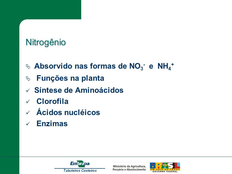 Nitrogênio Absorvido nas formas de NO 3 - e NH 4 + Funções na planta Síntese de Aminoácidos Clorofila Ácidos nucléicos Enzimas