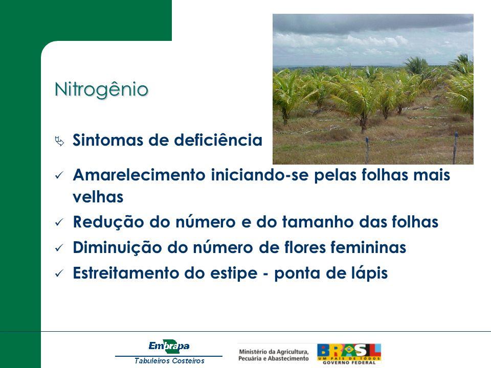 Cobre Sintomas de deficiência Arquiamento do ráquis Folhas novas são pequenas e cloróticas Folíolos secos nas extremidades.
