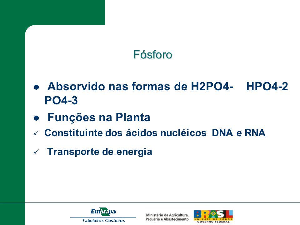 Fósforo Fósforo Absorvido nas formas de H2PO4- HPO4-2 PO4-3 Funções na Planta Constituinte dos ácidos nucléicos DNA e RNA Transporte de energia