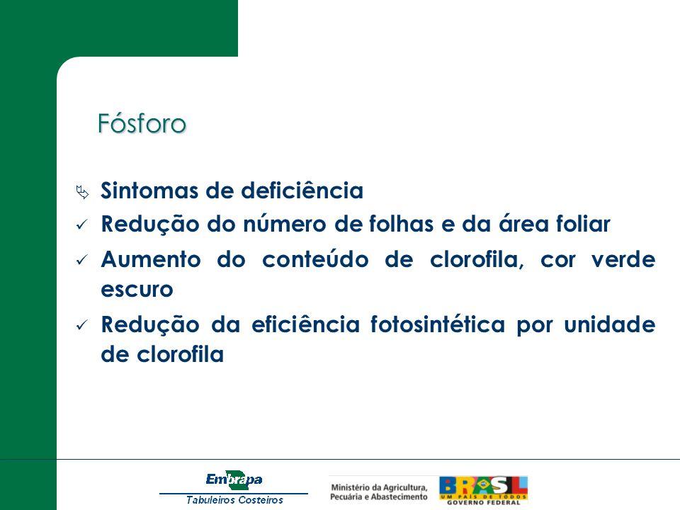 Fósforo Fósforo Sintomas de deficiência Redução do número de folhas e da área foliar Aumento do conteúdo de clorofila, cor verde escuro Redução da efi