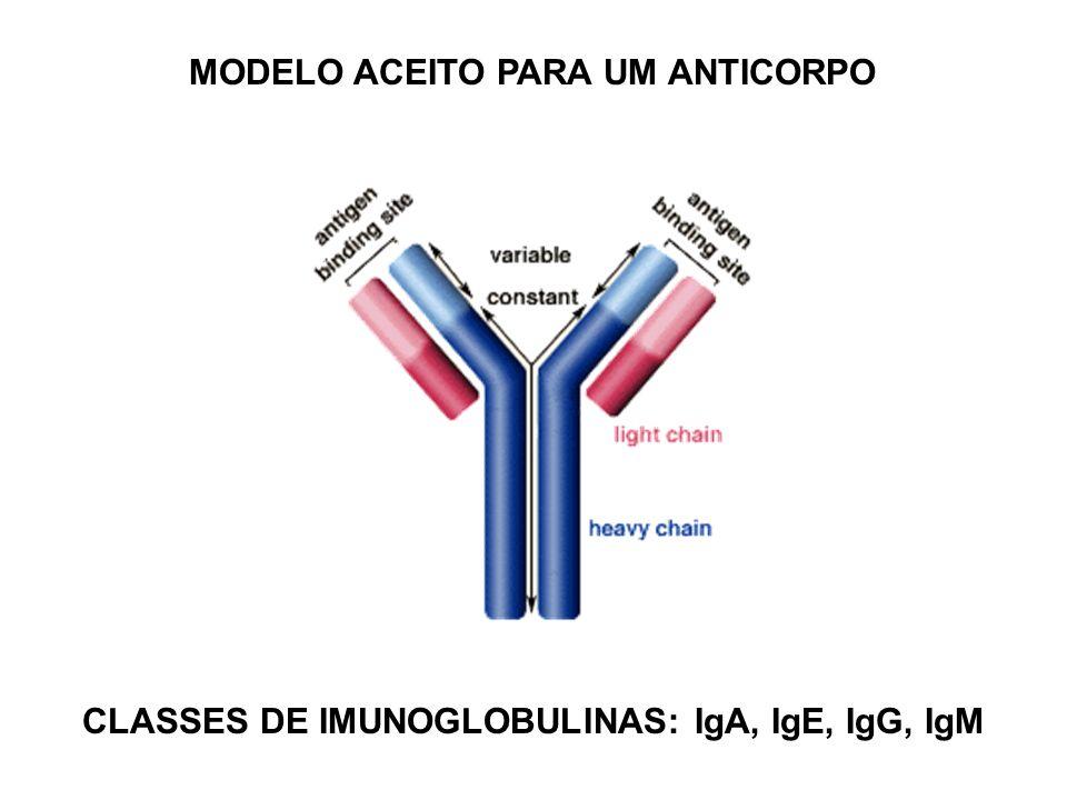 MODELO ACEITO PARA UM ANTICORPO CLASSES DE IMUNOGLOBULINAS: IgA, IgE, IgG, IgM