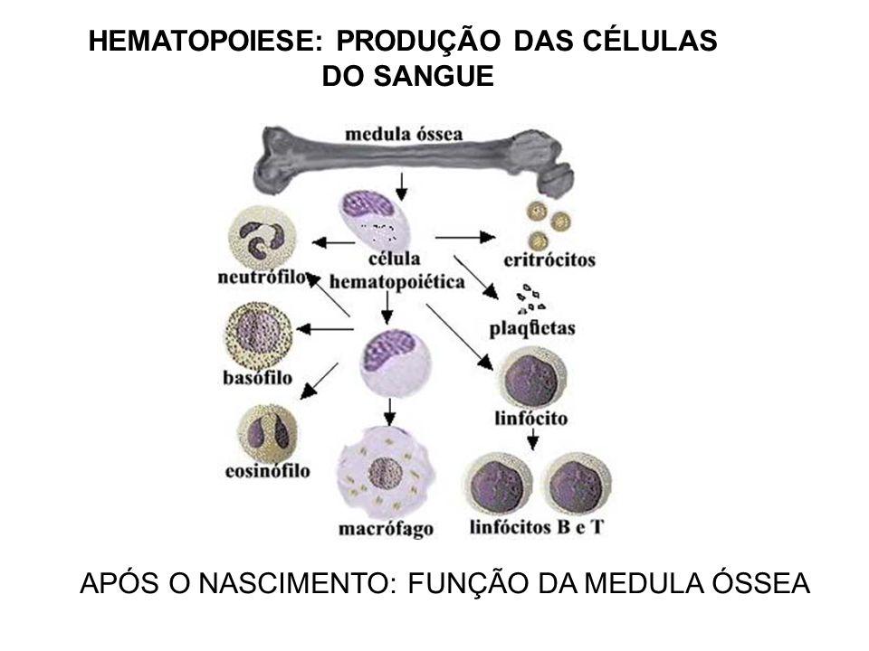 Sem medula óssea funcional o sistema imunológico irá à falência Cap 1