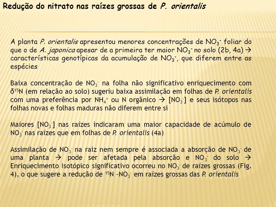 Redução do nitrato nas raízes grossas de P. orientalis A planta P. orientalis apresentou menores concentrações de NO 3 - foliar do que o de A. japonic