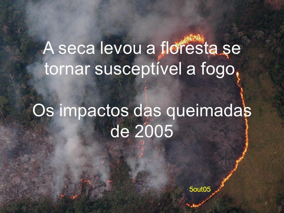 5out05 A seca levou a floresta se tornar susceptível a fogo. Os impactos das queimadas de 2005 6