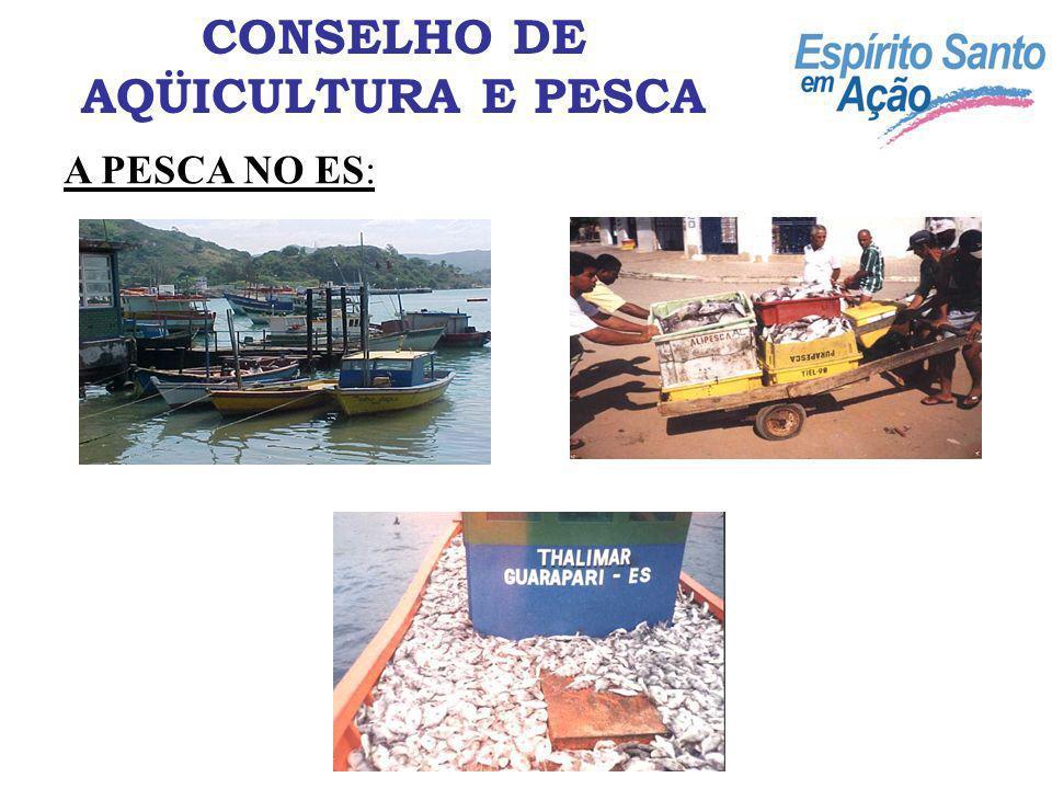 A PESCA NO ES: CONSELHO DE AQÜICULTURA E PESCA