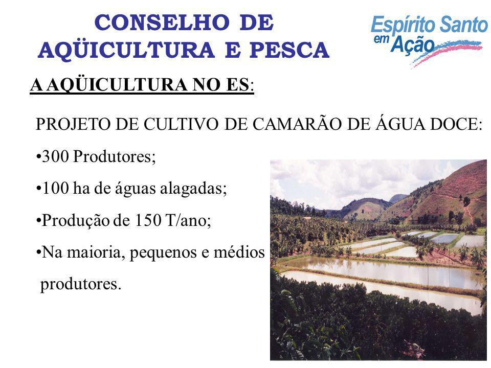 A AQÜICULTURA NO ES: CONSELHO DE AQÜICULTURA E PESCA PROJETO DE CULTIVO DE CAMARÃO DE ÁGUA DOCE: 300 Produtores; 100 ha de águas alagadas; Produção de