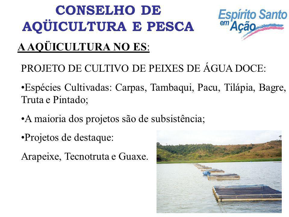 A AQÜICULTURA NO ES: CONSELHO DE AQÜICULTURA E PESCA PROJETO DE CULTIVO DE MEXILHÕES: 80 famílias beneficiadas; Produção de 40 T/ano (mexilhão limpo); Envolve principalmente pescadores artesanais e catadores de mariscos.
