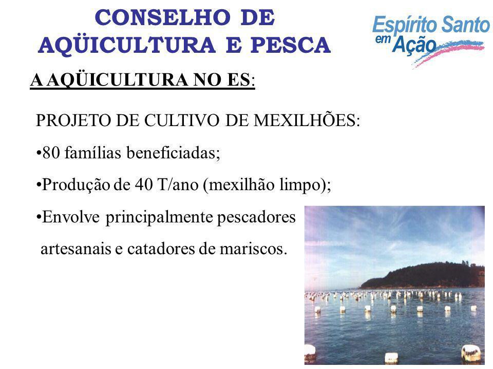 A AQÜICULTURA NO ES: CONSELHO DE AQÜICULTURA E PESCA PROJETO DE CULTIVO DE OSTRAS: 25 famílias beneficiadas; Produção de 50.000 unidades por ano; Envolve principalmente pescadores artesanais e marisqueiros.