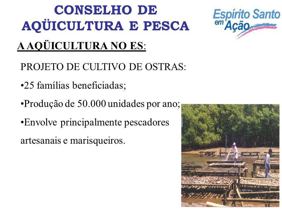 A AQÜICULTURA NO ES: CONSELHO DE AQÜICULTURA E PESCA PROJETO DE CULTIVO DE CAMARÃO MARINHO: Condomínio do Camarão; 103 ha de área alagada; Produção de 360 T/ano.