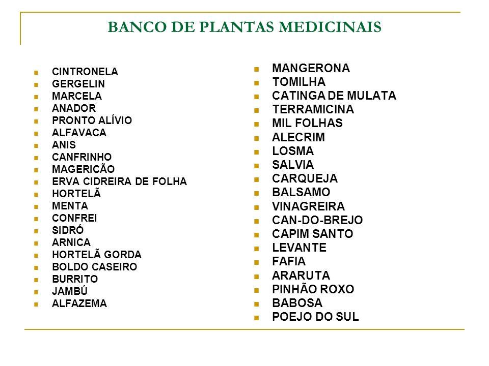 BANCO DE PLANTAS MEDICINAIS CINTRONELA GERGELIN MARCELA ANADOR PRONTO ALÍVIO ALFAVACA ANIS CANFRINHO MAGERICÃO ERVA CIDREIRA DE FOLHA HORTELÃ MENTA CO