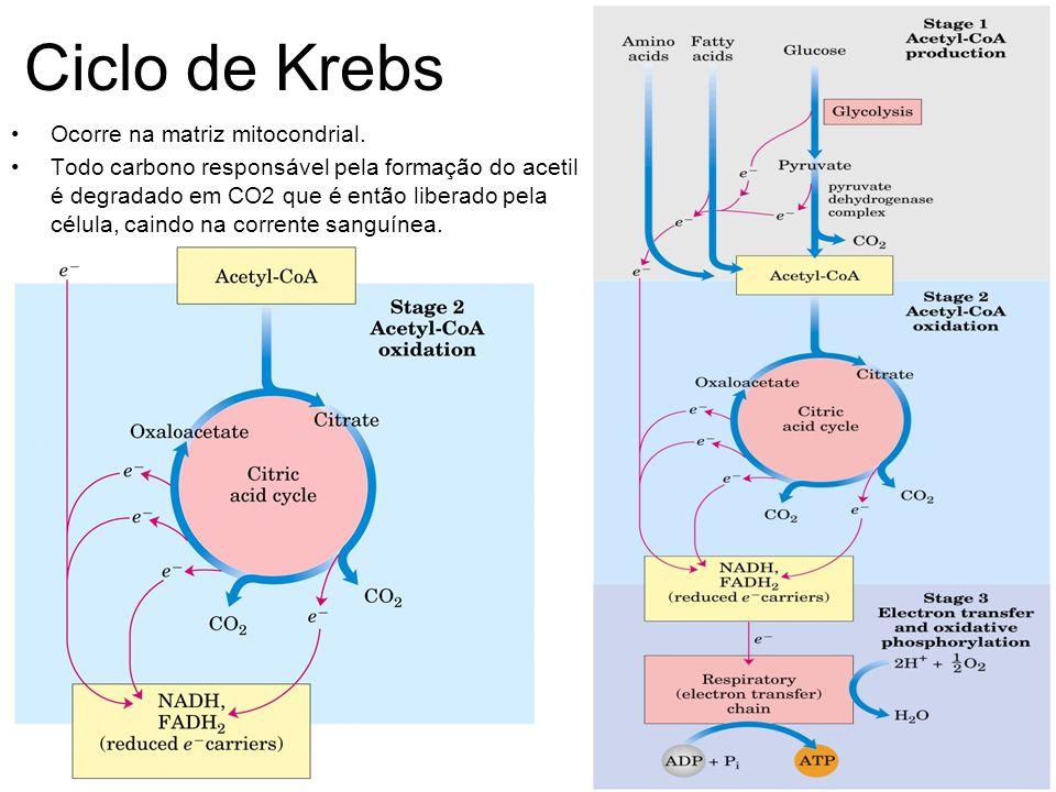 Ciclo de Krebs Ocorre na matriz mitocondrial. Todo carbono responsável pela formação do acetil é degradado em CO2 que é então liberado pela célula, ca
