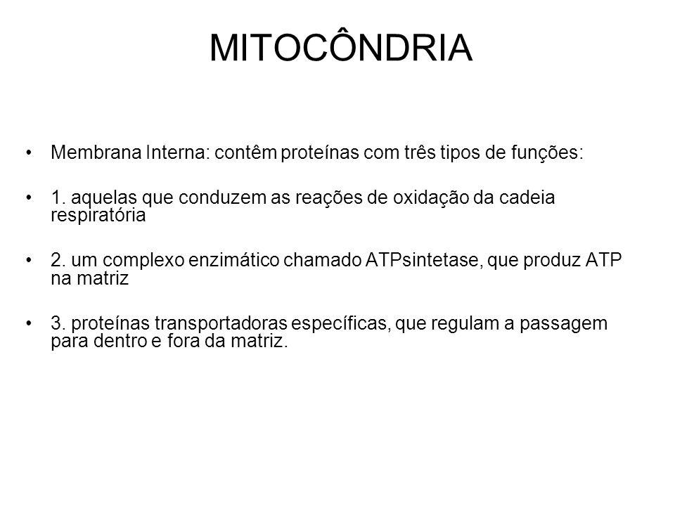 MITOCÔNDRIA Membrana Interna: contêm proteínas com três tipos de funções: 1. aquelas que conduzem as reações de oxidação da cadeia respiratória 2. um