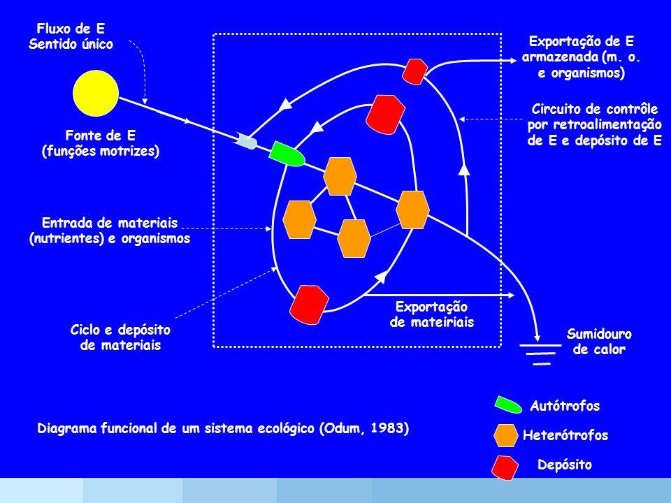 Diagrama funcional de um sistema ecológico (Odum, 1983) Autótrofos Fluxo de E Sentido único Fonte de E (funções motrizes) Entrada de materiais (nutrie