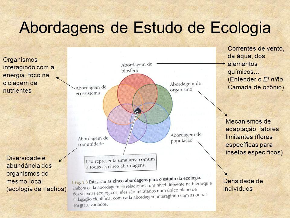Abordagens de Estudo de Ecologia Organismos interagindo com a energia, foco na ciclagem de nutrientes Diversidade e abundância dos organismos do mesmo
