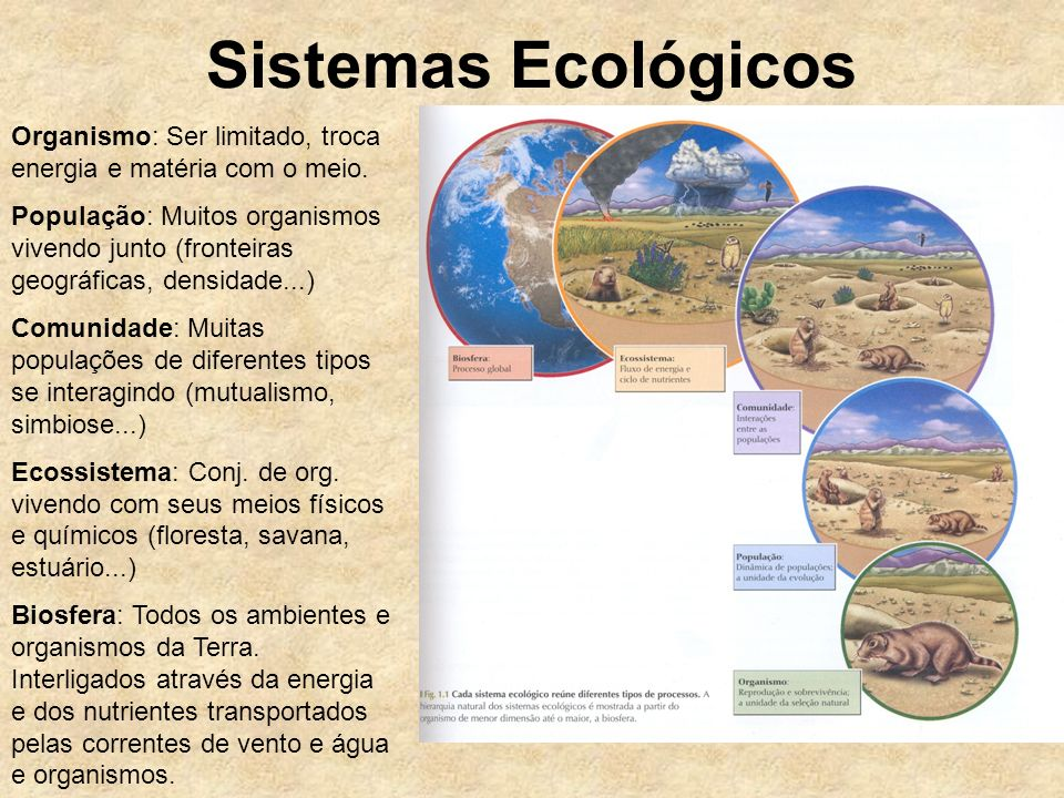 Sistemas Ecológicos Organismo: Ser limitado, troca energia e matéria com o meio. População: Muitos organismos vivendo junto (fronteiras geográficas, d