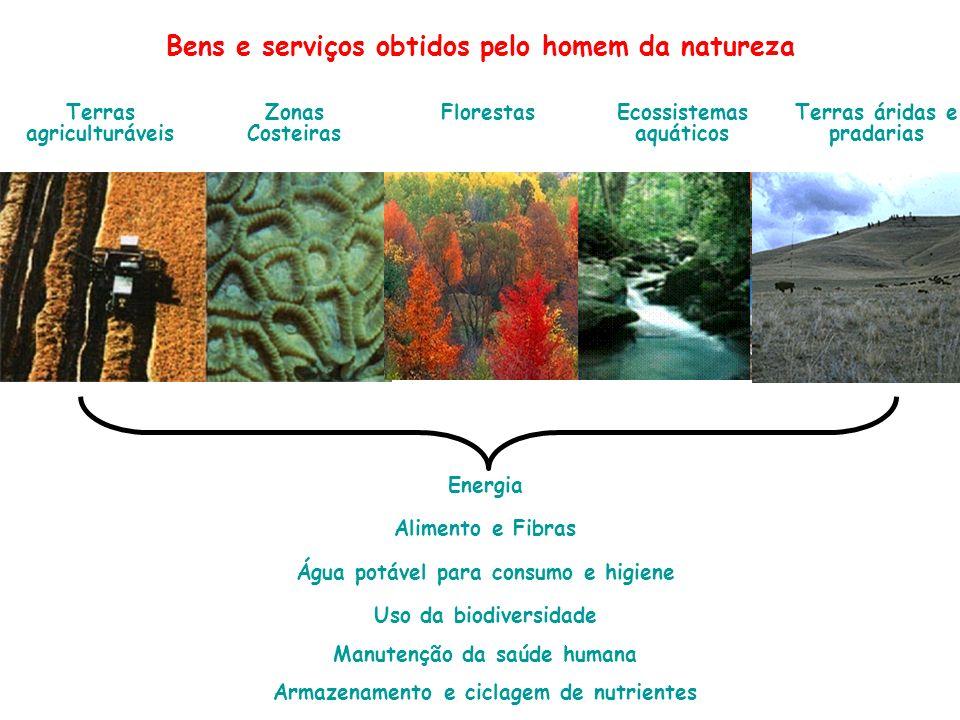 Energia Alimento e Fibras Água potável para consumo e higiene Uso da biodiversidade Manutenção da saúde humana Armazenamento e ciclagem de nutrientes