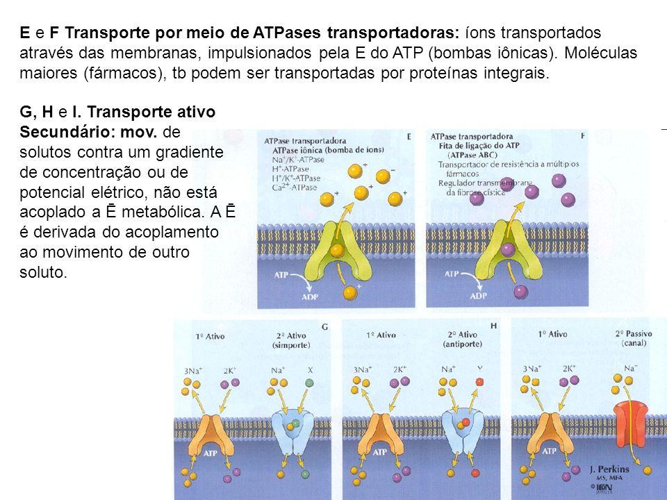 E e F Transporte por meio de ATPases transportadoras: íons transportados através das membranas, impulsionados pela E do ATP (bombas iônicas). Molécula