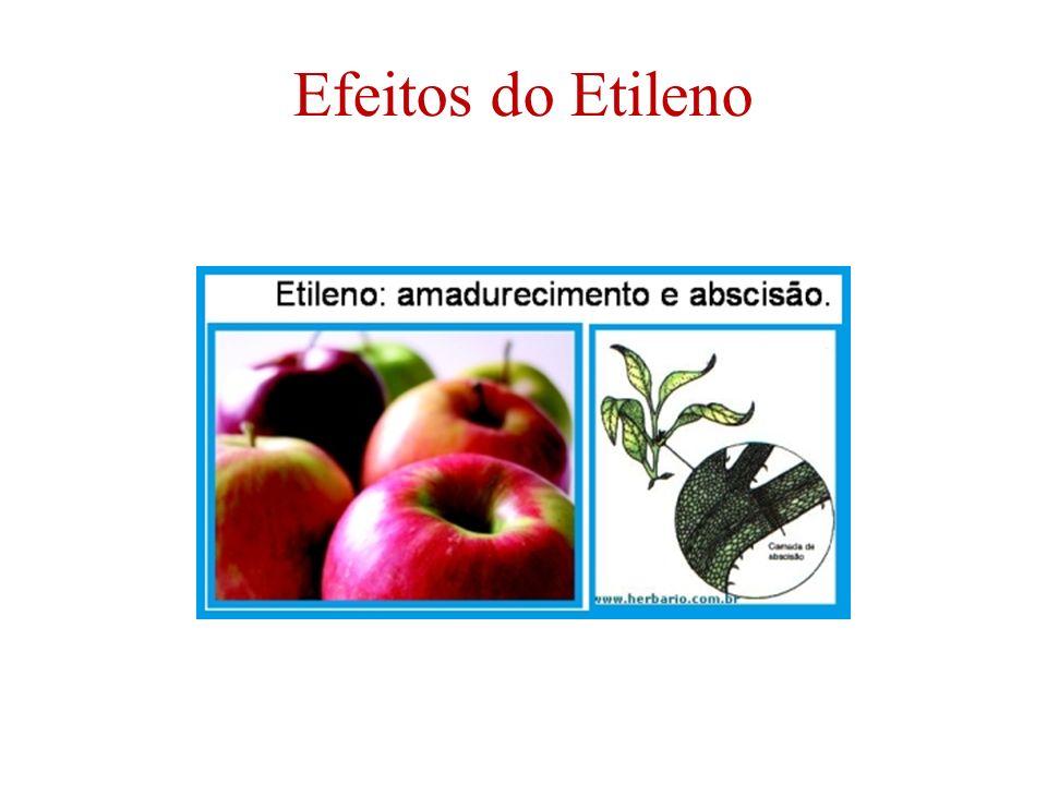Efeitos do Etileno
