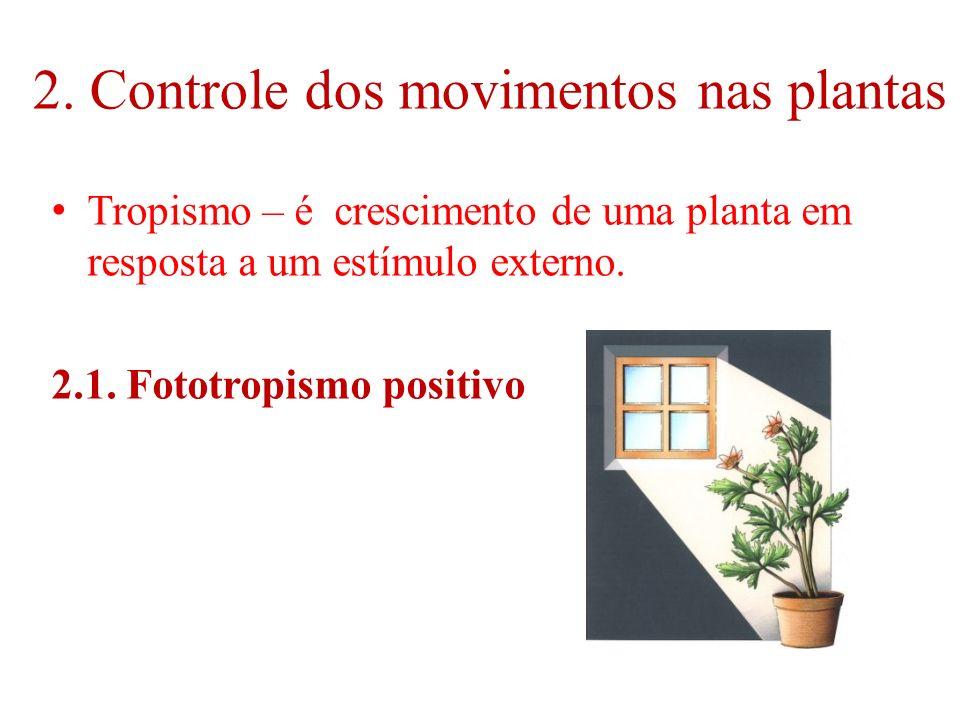 2. Controle dos movimentos nas plantas Tropismo – é crescimento de uma planta em resposta a um estímulo externo. 2.1. Fototropismo positivo