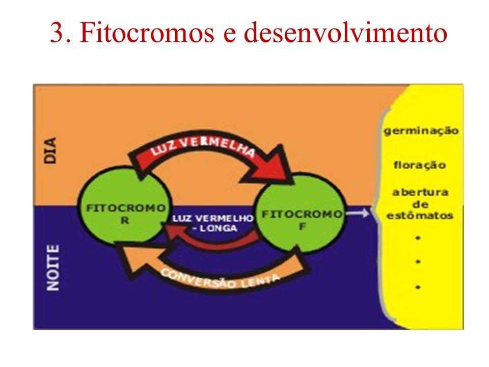3. Fitocromos e desenvolvimento