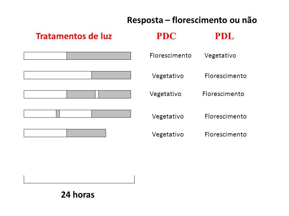 24 horas Tratamentos de luz Resposta – florescimento ou não PDC PDL Florescimento Vegetativo Vegetativo Florescimento