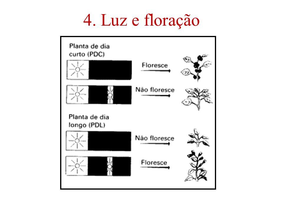 4. Luz e floração