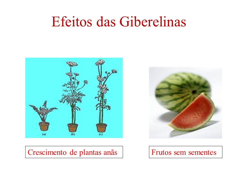 Efeitos das Giberelinas Crescimento de plantas anãs Frutos sem sementes