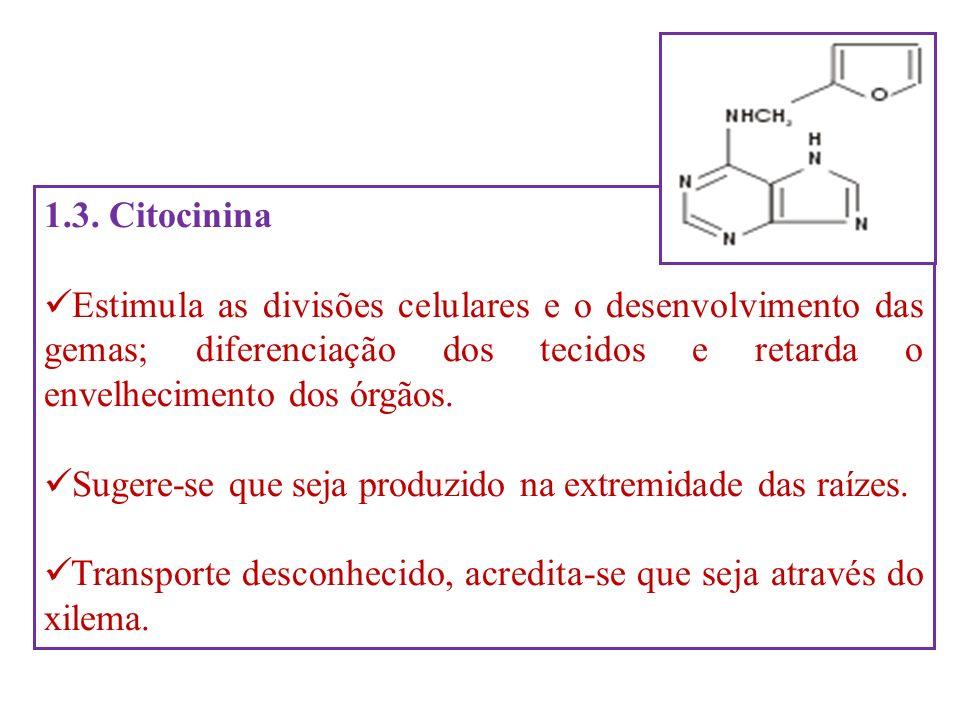 1.3. Citocinina Estimula as divisões celulares e o desenvolvimento das gemas; diferenciação dos tecidos e retarda o envelhecimento dos órgãos. Sugere-