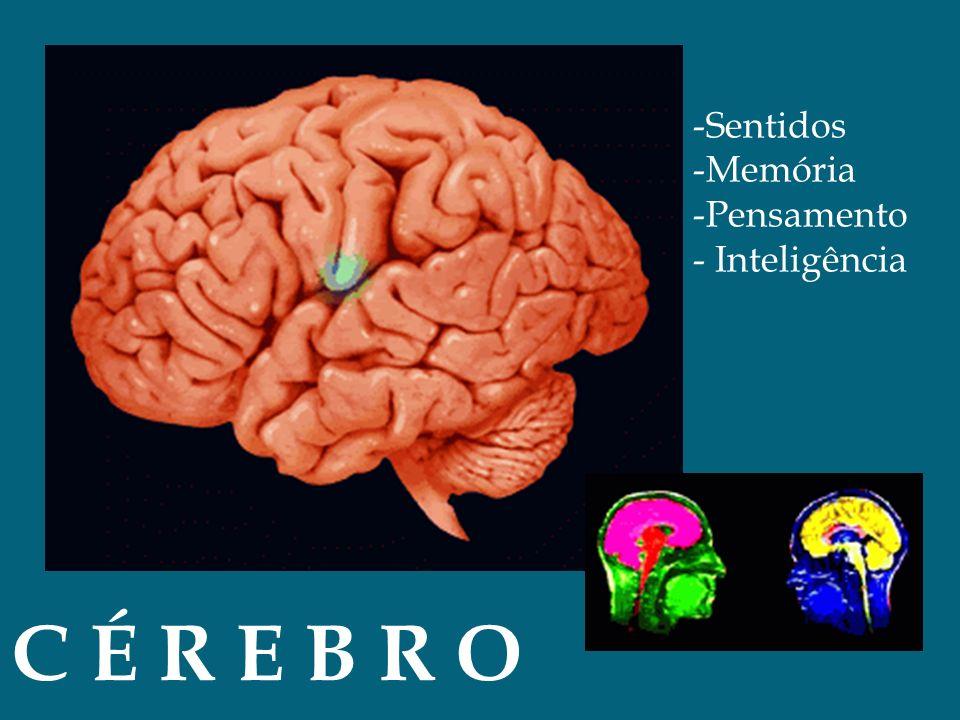 -Sentidos -Memória -Pensamento - Inteligência C É R E B R O
