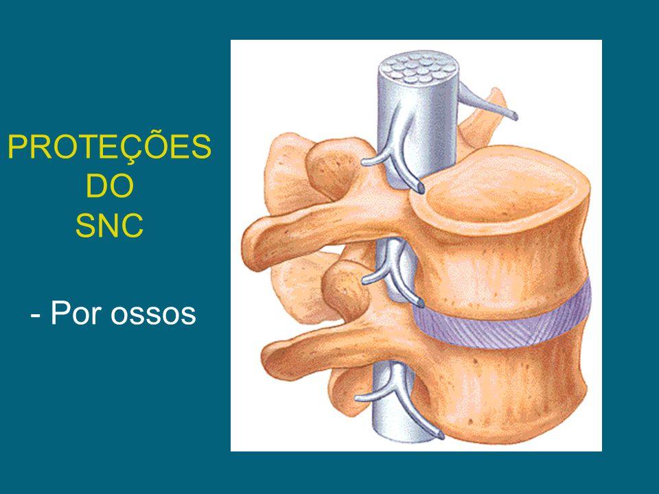 PROTEÇÕES DO SNC - Por ossos