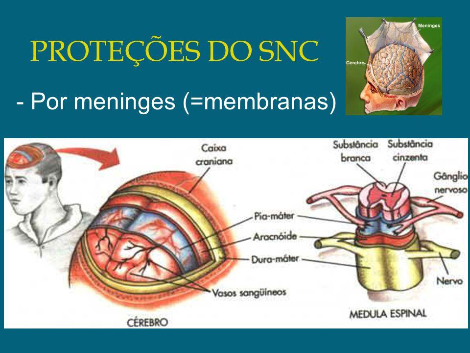 PROTEÇÕES DO SNC - Por meninges (=membranas)