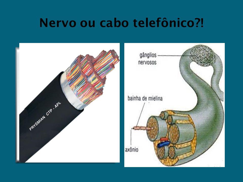 Nervo ou cabo telefônico?!