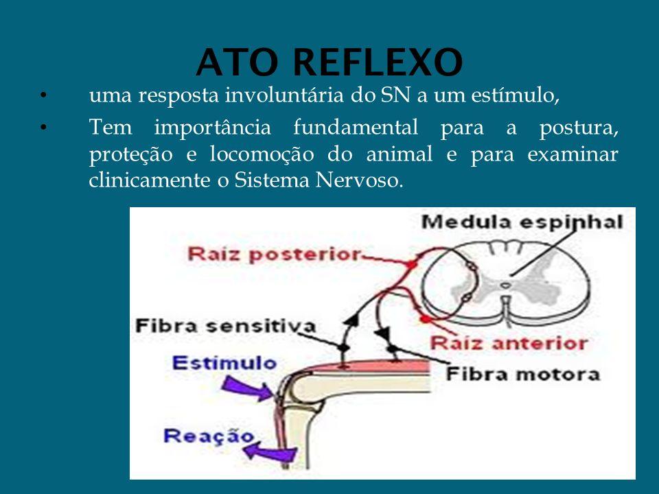 ATO REFLEXO uma resposta involuntária do SN a um estímulo, Tem importância fundamental para a postura, proteção e locomoção do animal e para examinar