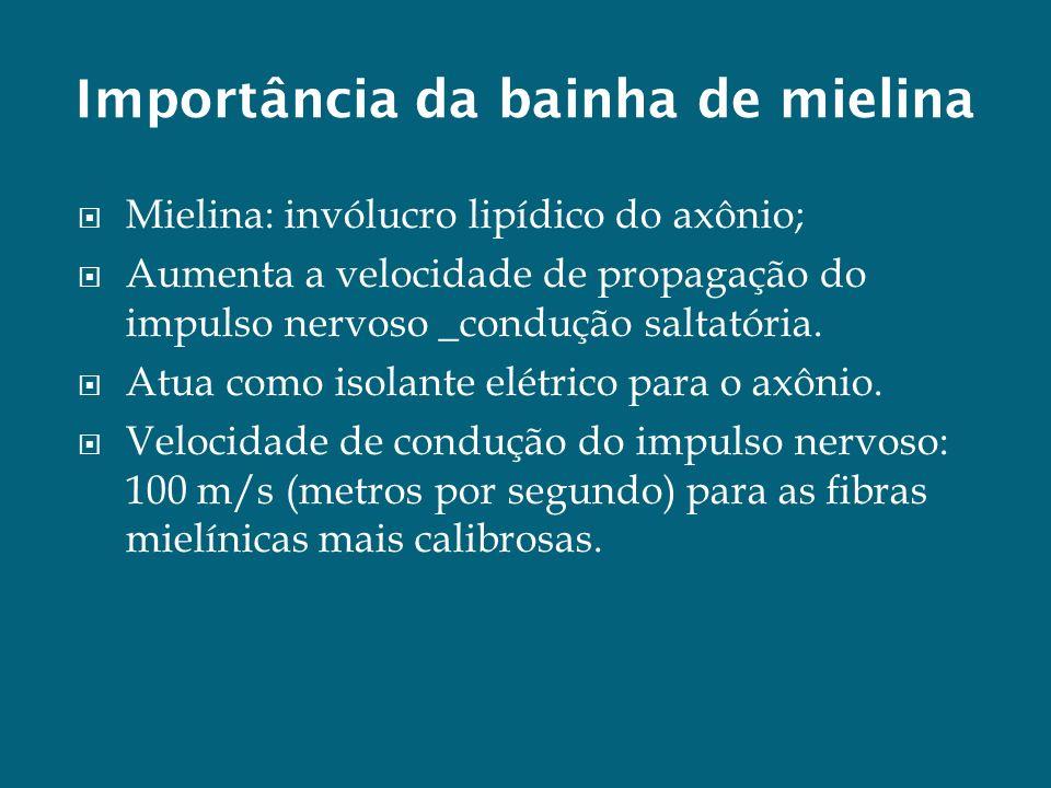 Importância da bainha de mielina Mielina: invólucro lipídico do axônio; Aumenta a velocidade de propagação do impulso nervoso _condução saltatória. At